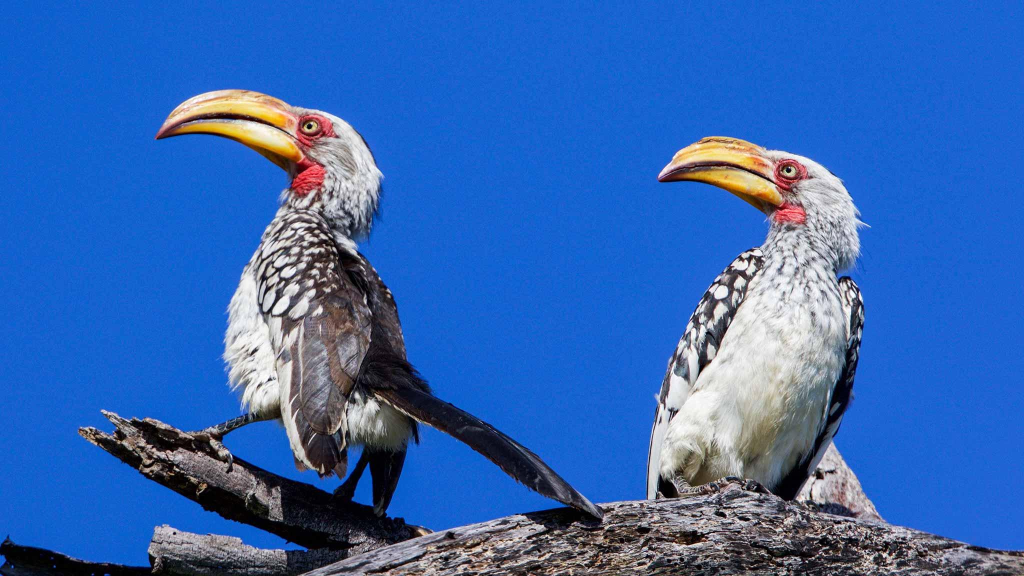 Sango-Birding-Start