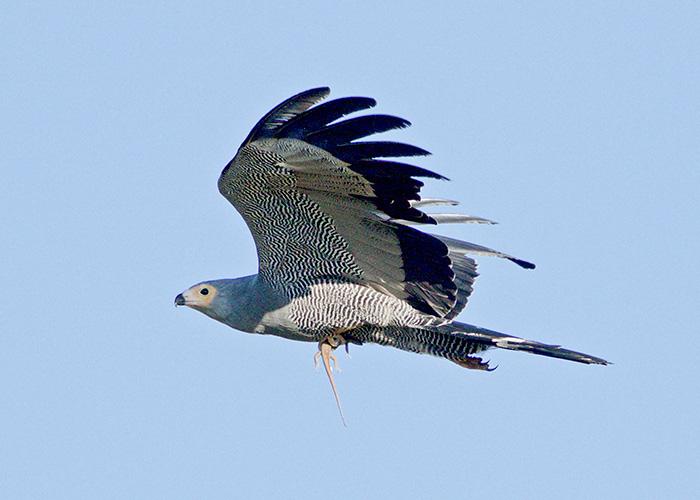Sango-Birding_3