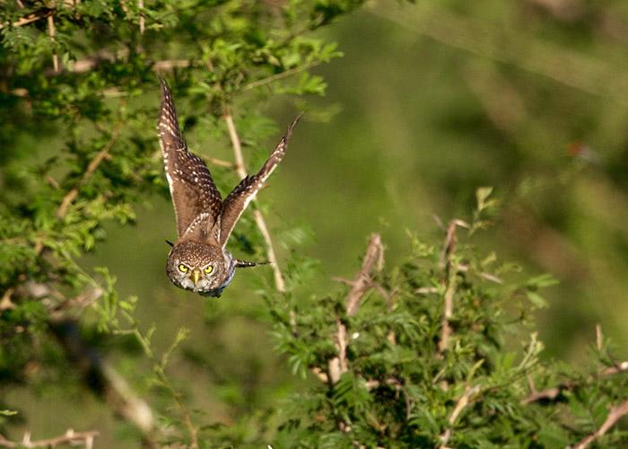 Sango-Birding_4