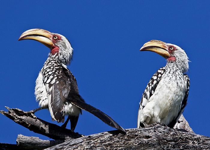 Sango-Birding_5