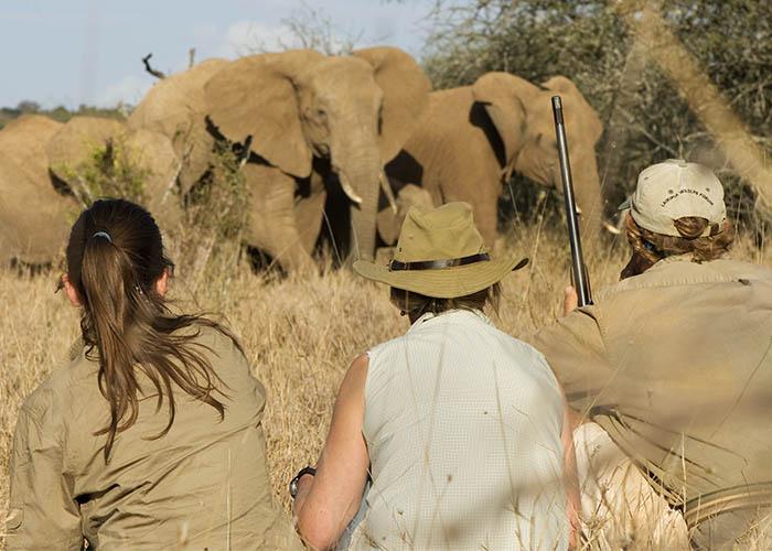 Sango_Walking_Safari_1